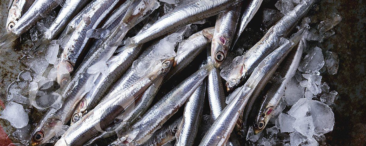 Prueba las mejores anchoas en Asador City Wok Guipúzcoa